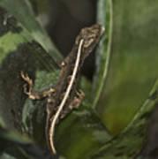 Lizard 2 Poster