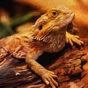 Lizard - Id 16217-202744-5164 Poster