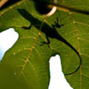 Lizard On A Fig Leaf Poster