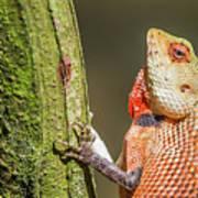 Lizard In Maldive Poster