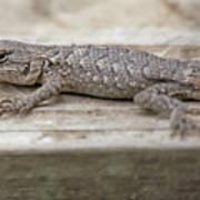 Lizard On Deck Poster
