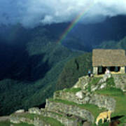 Llama And Rainbow At Machu Picchu Poster