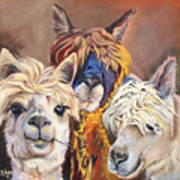 Llama Love Poster