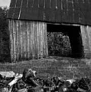 lloyd-shanks-barn-2BW Poster