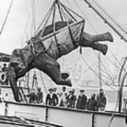 Loading Elephant, 1930s Poster