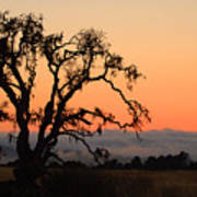 Loan Tree Overlooking Fog Poster