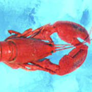 Lobster On Turquoise Poster