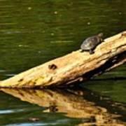 Log Turtle L 3584 Poster