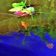 Loggerhead Sea Turtle In The Florida Everglades Poster