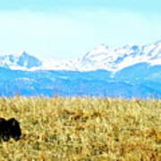 Lone Buffalo Watching The Rocky Mountains Poster