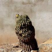 Lone Cactus In Sepia Tone Poster