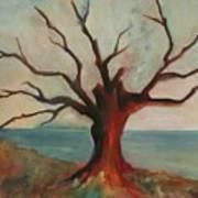Lone Oak - Gulf Coast Poster