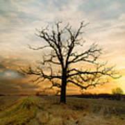 Lone Oak On The Marsh Poster
