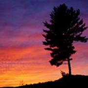 Lone Pine Sunset Poster