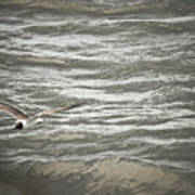 Lone Sea Gull Poster