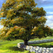 Lone Tree And Wall Poster