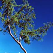 Lone Tree Hawaii Poster