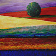 Lone Tree In Flower Fields Of Provence Poster