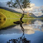Lone Tree, Llyn Padarn Poster