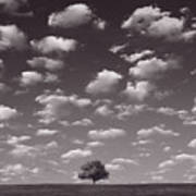 Lone Tree Morning In B And W Poster