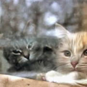 Lonely Kittens Behind The Glass Poster