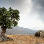 Lonely Olive Tree And Stormy Cloudy Sky Poster