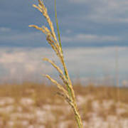 Lonely Sea Oat Poster