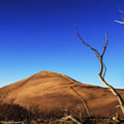 Lonely Bare Tree And Sanddunes Poster
