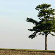 Lonesome Fir Poster