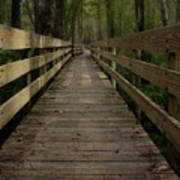Long Boardwalk Through The Wetlands Poster