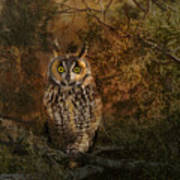 Long Eared Owl Surprise Poster
