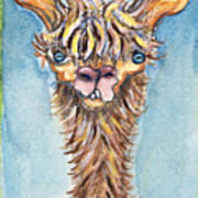 Long Neck Alpaca Poster