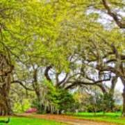 Longwood Plantation In Spring Glory Poster