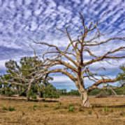 Lonley Tree Poster