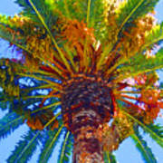 Looking Up At Palm Tree  Poster