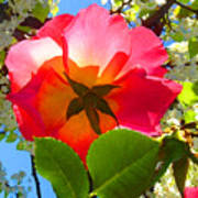 Looking Up At Rose And Tree Poster