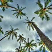 Looking Up The Hawaiian Palm Tree Hawaii Collection Art Poster