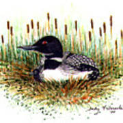 Loon And Baby Judy Filarecki Watercolor Poster