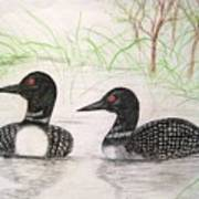 Loons Watching Poster