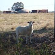 Lost Lamb Poster