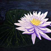 Lotus Blossom At Night Poster