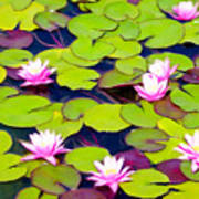 Lotus Blossom Lily Pads Poster
