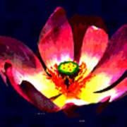 Lotus Blue Poster