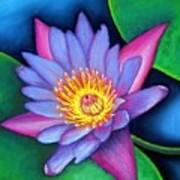 Lotus Divine Poster