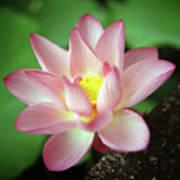 Lotus Flower Poster by Yoshika Sakai