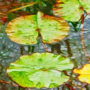 Lotus Flowers Leaves Poster