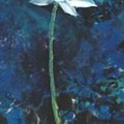 Lotus IIi Poster