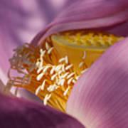 Lotus Seed Pod Poster