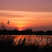 Louisiana Rice Field At Sunset Poster
