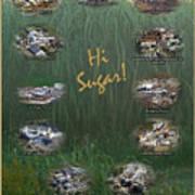 Louisiana Sugar Cane Poster 2008-2009 Poster